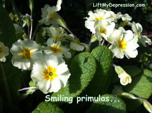 Primula smiling